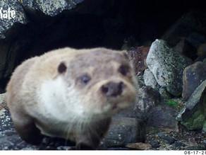 Bushnell Shetland Otter Joy!  Part 1