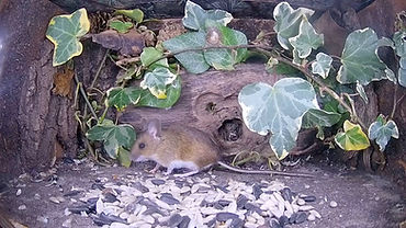 March31_WoodMouse_00000.jpg