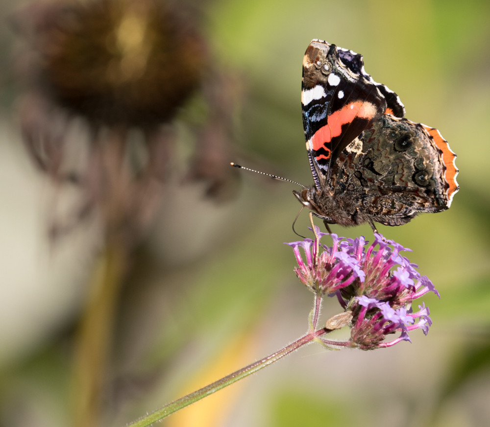 yv_butterflies-7870