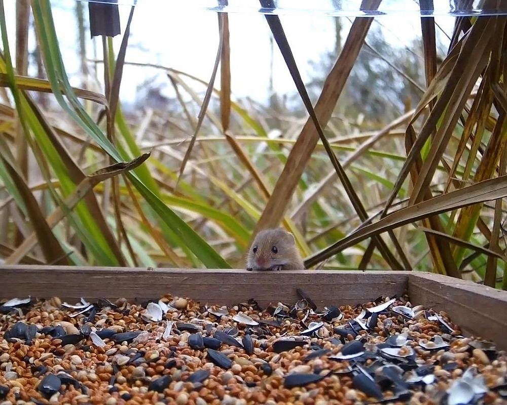 Vivotek Harvest Mice on 192.168.1.14 2016-03-08 09-35-41.244