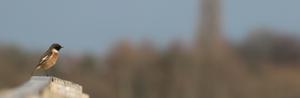 Screen Shot 2015-01-31 at 16.35.22