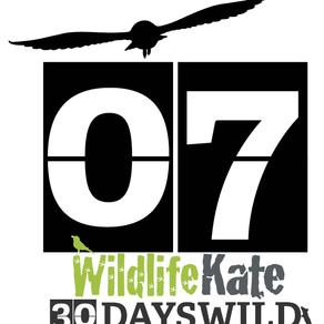 #30DaysWild – Day 7  Fox cub appearances