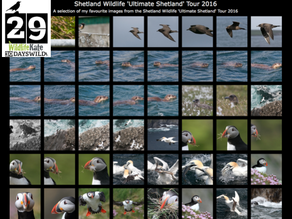 #30DaysWild – Day 29  What a Week! Photographic Highlights of 'Ultimate Shetland & b