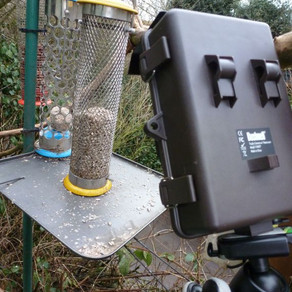 Bushnell close-ups on the hub feeders