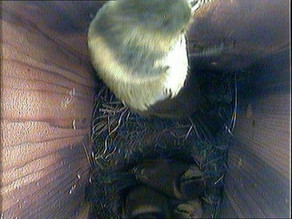 Nestbox update 30th April….. We leave at last!