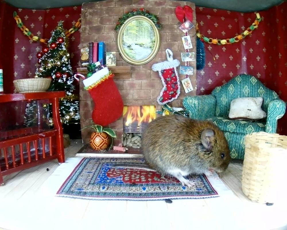 Christmas Mammal Box 2015_2_00000