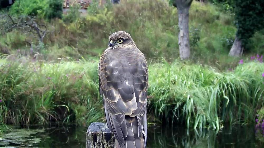Kingfisher VIVOTEK 192.168.1.132 2015-09-02 18-48-30.592