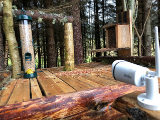 A Visit to Aigas Field Centre – Part 2: Birdsy Camera Set-up
