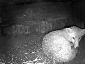 Exciting Sleepover in our Sett!