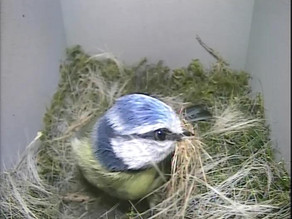 It's April and Nest Box Activity is on the Increase……