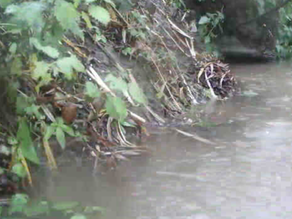 Heavy rain tests our floating otter cam platform….
