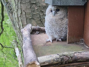 The final week in the Tawny Box; Nyx faces the outside world!