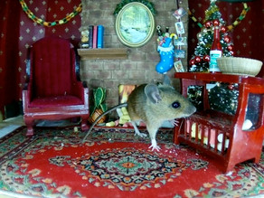 Christmas Mice & Hungry Birds