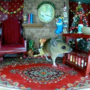 Christmas Mice & Hungry Birds