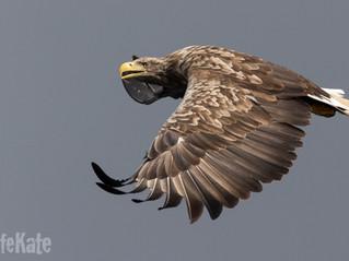 Seaward again for Eagles!