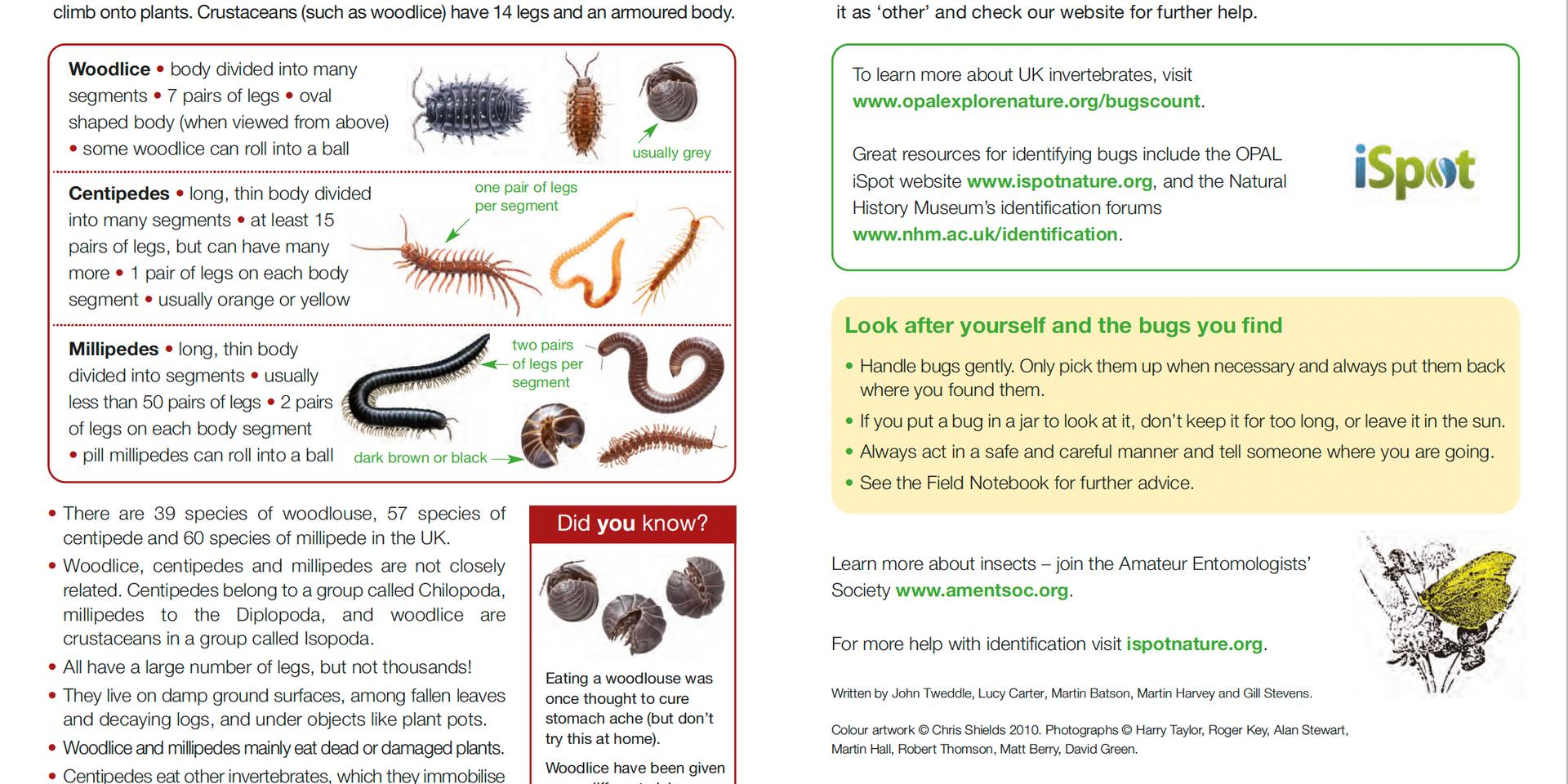 Invertebrate ID Guide 6