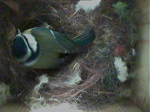 More eggs in nest boxes!