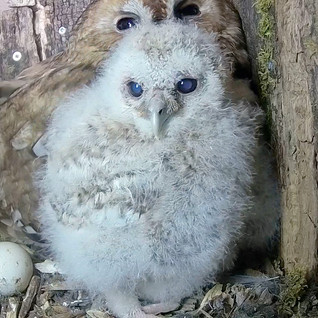 Owlet dramas, as we go from three to two….