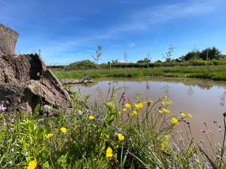 Yew View Upper Field Wildlife Pond