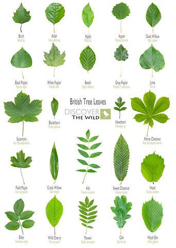 Leaf ID .jpg