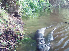 'Otterly' Brill Yew View Otters & Autumnwatch Filming!!