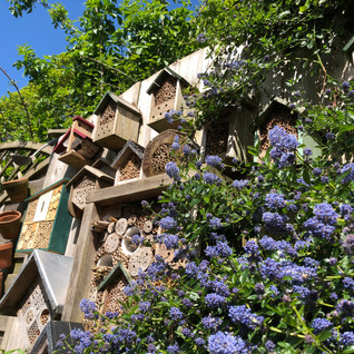 Gardening for wildlife – My May Garden