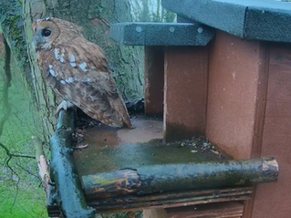 Tawny Box 2021... looking forward to another breeding year