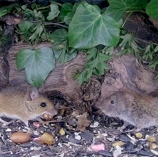 My Mammal Box is back online!