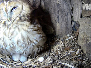 Our first owlet, Squirrel dramas & Daylight Snack Drop-offs!
