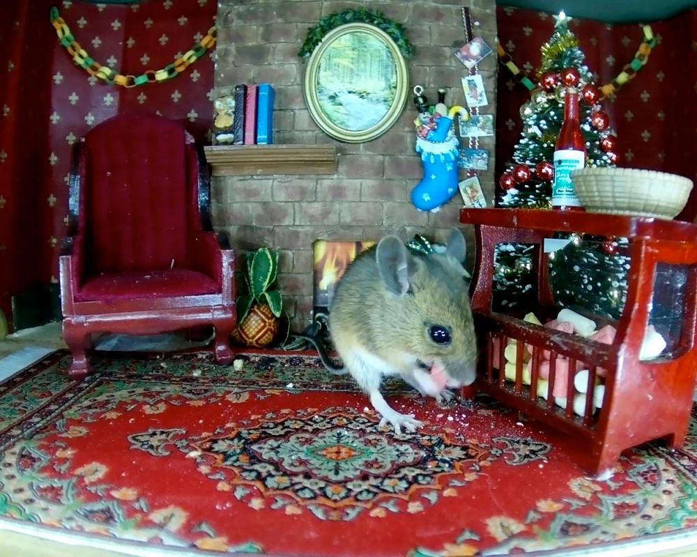 xmas-mouse-stashing-suet_00006