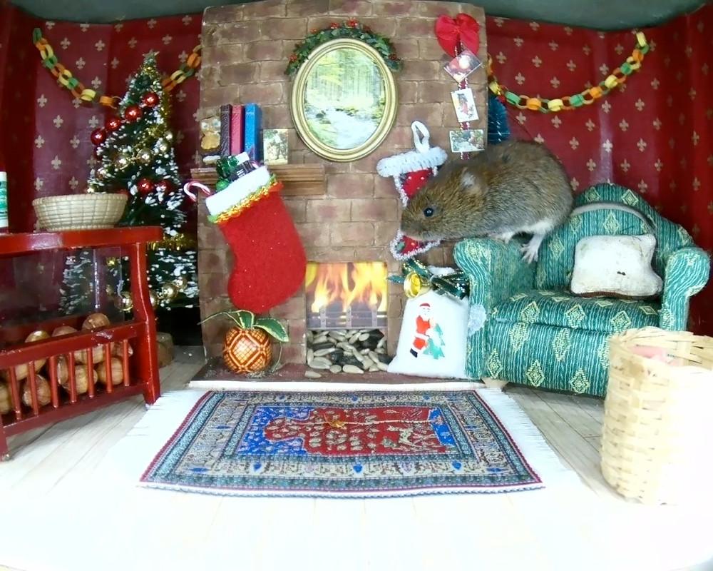 Christmas Mammal Box 2015_1_00003