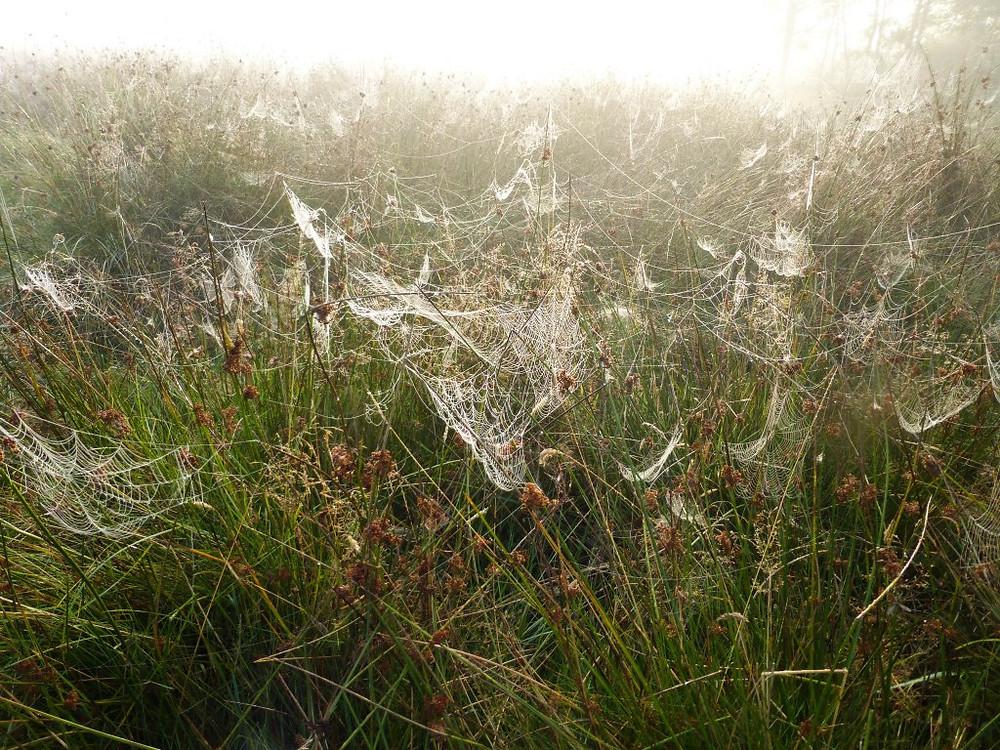 Spiders&Webs_-1000271