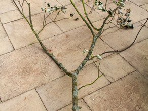 Make your own tree bird feeder!