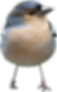 birds_PNG110.png