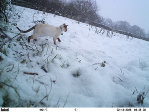 More Bushnell footage… Snowy visits