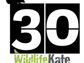 #30DaysWild – Day 30  A Yew View catch-up!