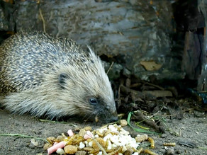 Prickly Diner HD gets its first visitor!