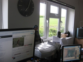 From my office window……