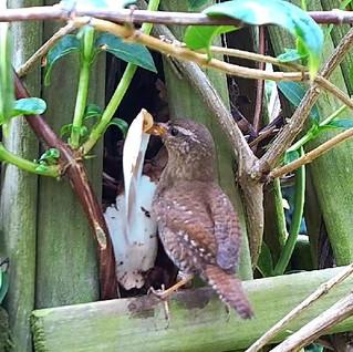 Wildlife  Galore Lock-down!