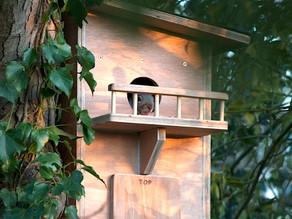 Squirrel Studio goes live!