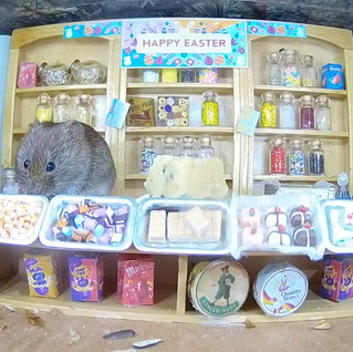 The Easter Mammal Box Sweet Shop goes live, for Bank Holiday Weekend!