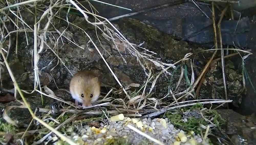 Wildlife Pond Mammal Box HD 2016-01-02 17-35-29.124