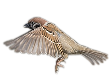 birds_PNG88.png