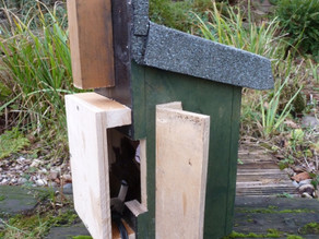 Sneak preview of some of my new nest boxes