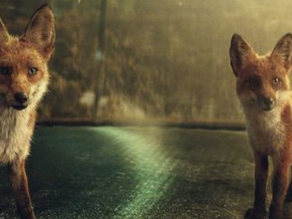 High profile wildlife themes in latest Christmas adverts….