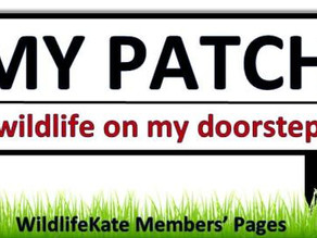 'My Patch' Member Pages