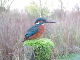 Kingfisher Jewels