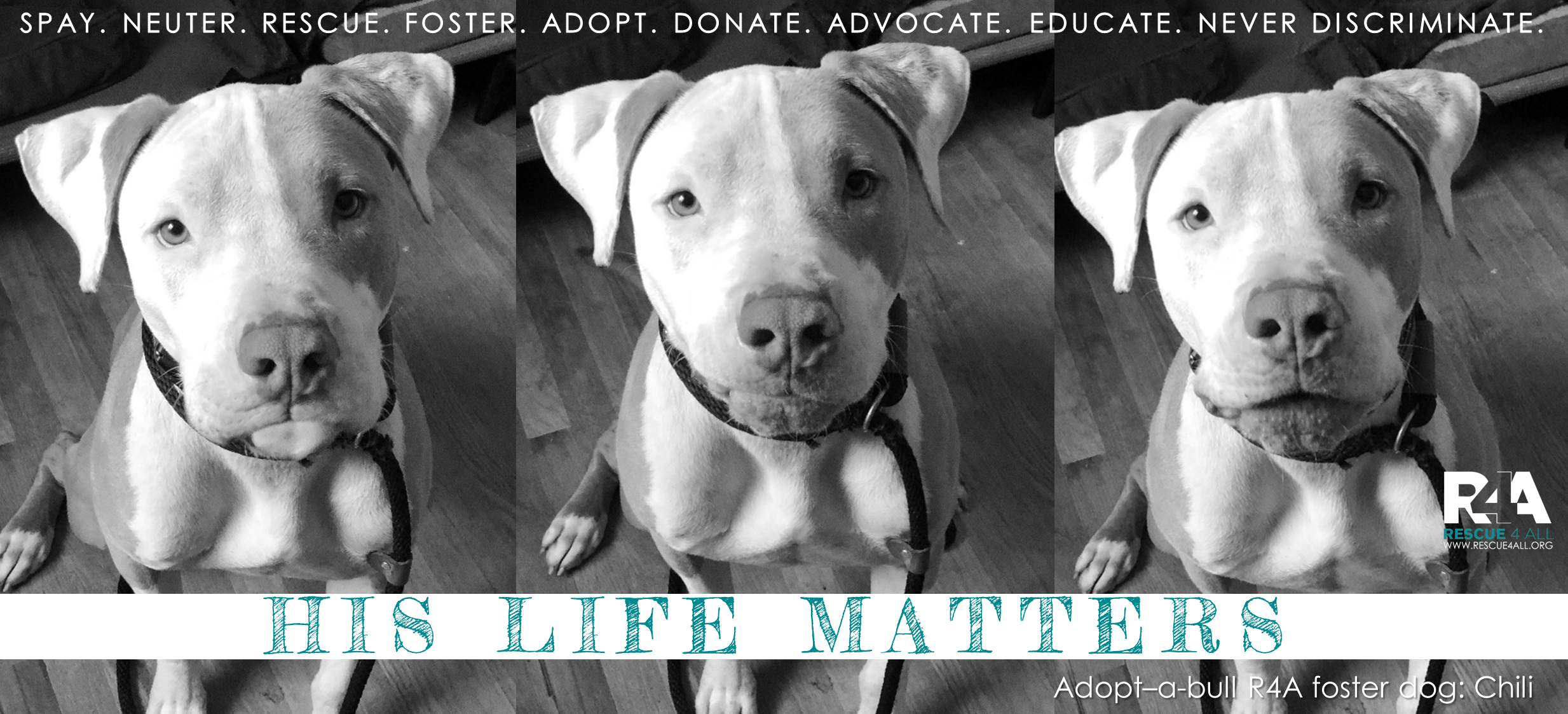 Rescue4All R4A Pitbull Rescue Dog Chili His Life Matters