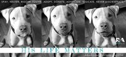 Rescue4All R4A Pitbull Rescue Dog Chili His Life Matters