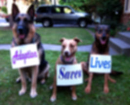 Adoption Saves Lives, Rescue4All, R4A